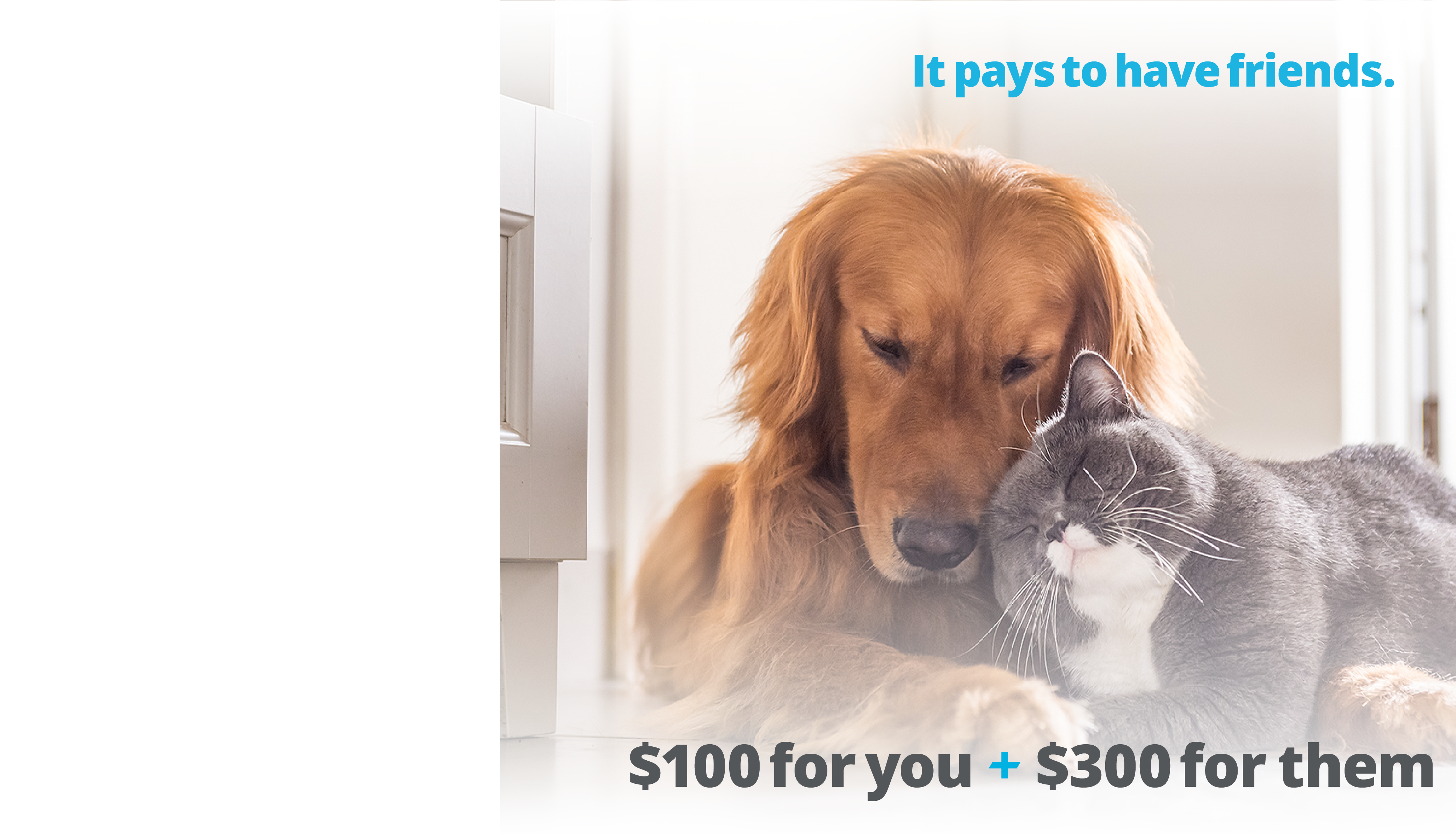 member referral landing page dog and cat-01-01-01-01